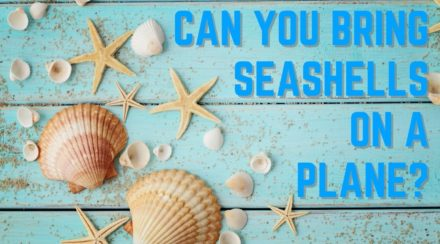 Can You Bring Seashells on a Plane?