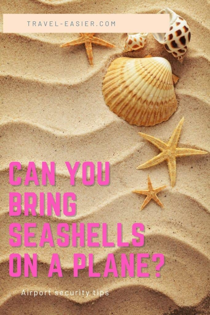 Can You Bring Seashells on a Plane? 1