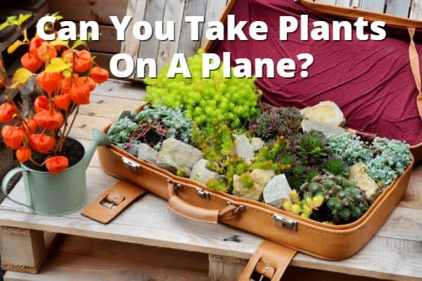 Can you take plants on a plane