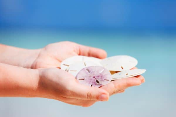 Can You Bring Seashells on a Plane? 2